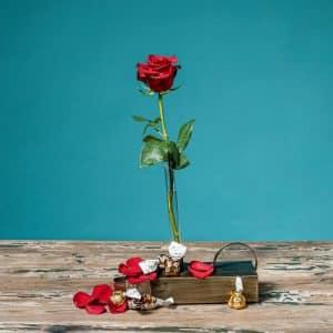 rosa roja para regalar con bombones